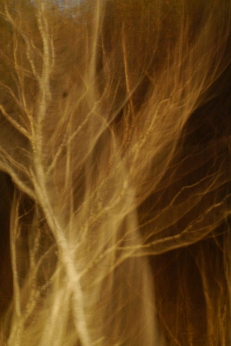 Baum1_impressionistisch