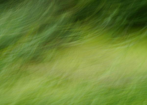 tümpel-bäume