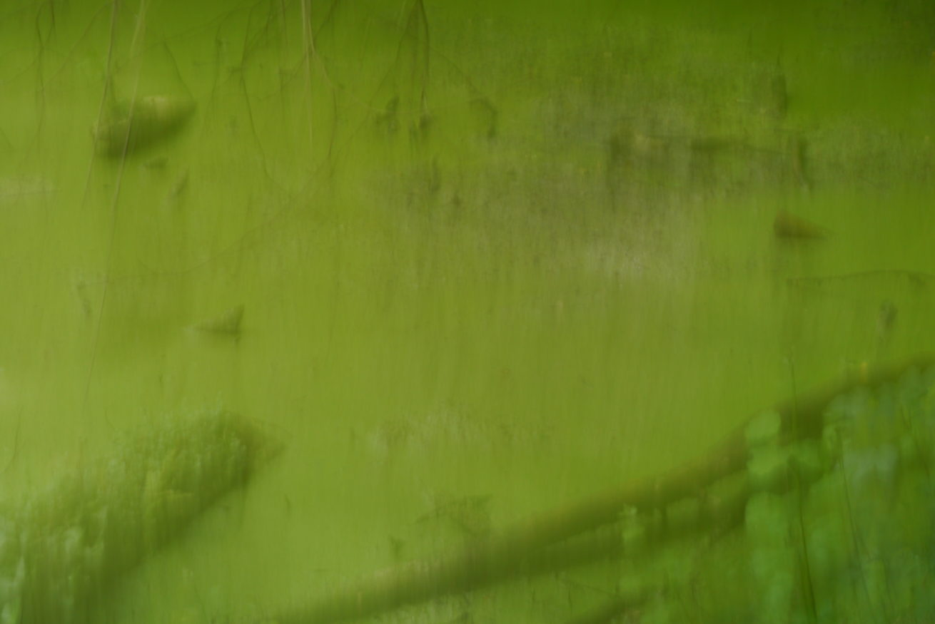 Tümpel_unter_Wasser