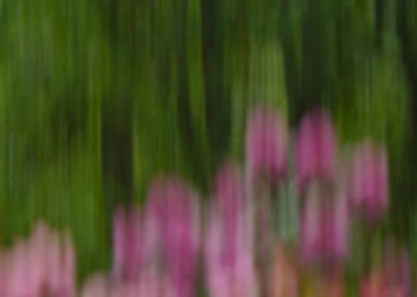 Blumen_impressionistisch