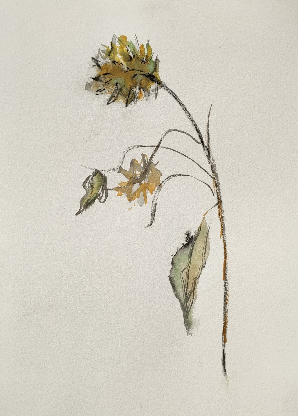 Sonnenblume_Herbst_Aquarell