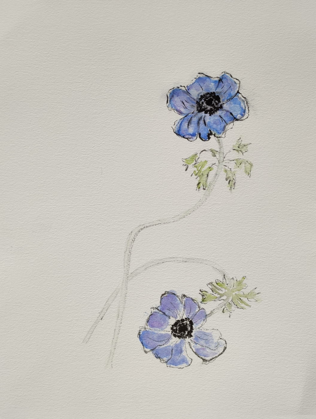 Anemonen 2020 Ink and Watercolour on Paper © Christiane Weismüller