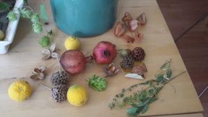 Früchte_Samen