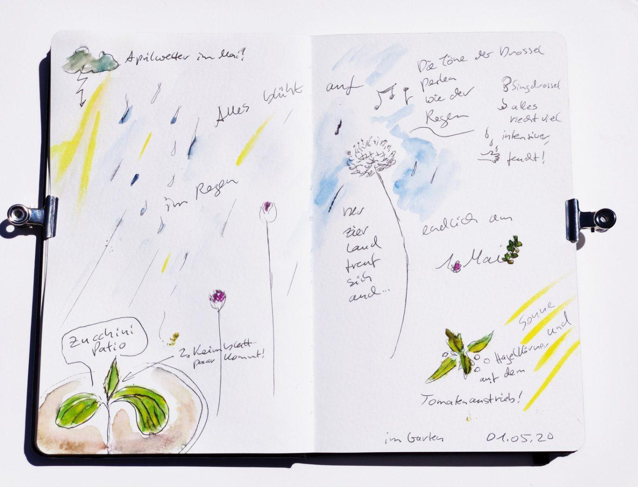 Nature_Journal_Garten_Zierlauch