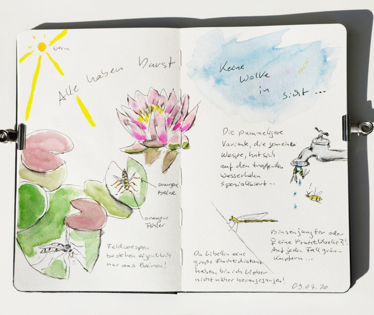 Nature_Journal_Seerose_Feldwespen_Binsenjungfer