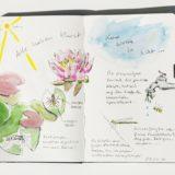 Nature_Journal_Seerosen_Feldwespen_Binsenjungfer