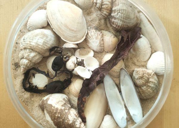 Meeresfundstücke