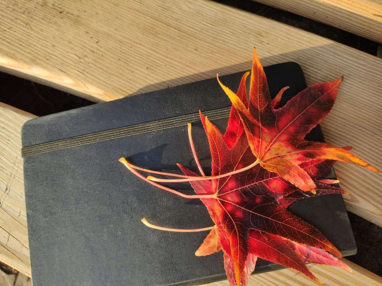 Amberbaum_Blätter