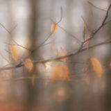 Midwinter Walk 2020 Photography © Christiane Weismüller