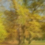 bäume-herbst-longexposure